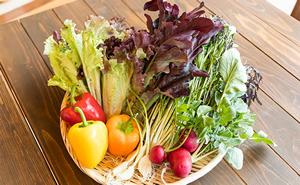 【定期便】【野菜ソムリエKANEOKAセレクト】旬の野菜・果物セット